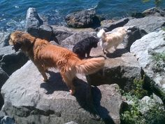 Cajun, Charlie & Essa negotiate boulders on a hike by the water with Courtney.