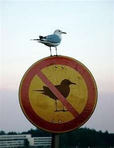 no bird sign w/bird