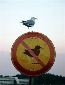 no bird sign w/bird