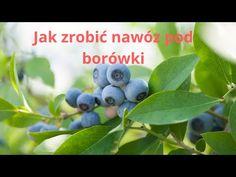 Jak zrobić nawóz pod borówki amerykańskie za darmo (2) - YouTube Natural Garden, Blueberry, Youtube, Fruit, Nature, Gardening, Gardens, Compost, Balcony