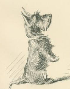 Antique Dog Print, Scottish Terrier by Lucy Dawson