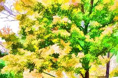 use coupon GYKNNN at checkout for a special discount Fall Trees, Coupon, Herbs, Leaves, Wall Art, Plants, Painting, Painting Art, Coupons
