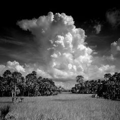 Clyde Butcher - Crystal River - West Coast - FL - one of my very most favorites