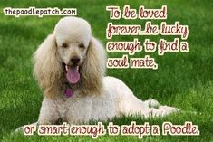 TO BE LOVED FOREVER BE LUCKY ENOUGH TO FIND A SOUL MATE OR SMART ENOUGH TO ADOPT A POODLE