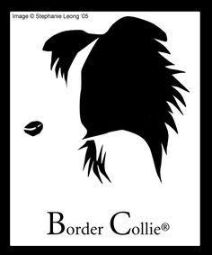 border collie drawing easy - Google leit