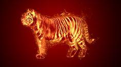 My fire tiger!