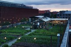 "The ""world's most sustainable eatery"" is on a rooftop in Copenhagen"