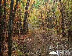 Image detail for -Forest Path « David Schneider | Photograffy
