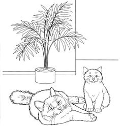Birman Cat Coloring page