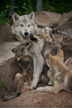 Oh my! All the pups want Mama's attention at the same time. So much love. Photo by Dark Knight.