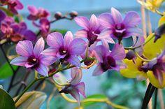 Светло-фиолетовые орхидеи