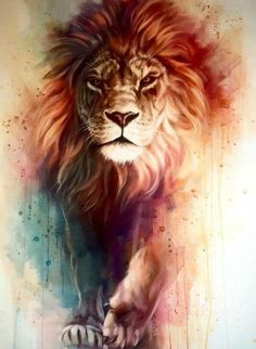 Lion iPhone Wallpaper HD – Best Wallpaper HD Source by livewallpaperhd Tier Wallpaper, Best Wallpaper Hd, Animal Wallpaper, Desktop Wallpapers, Screen Wallpaper, Lion Wallpaper Iphone, Lion And Lioness, Lion Of Judah, Angry Animals