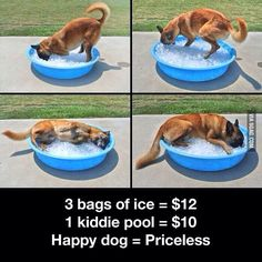 Ways to keep dog cool during the summer! Super cheap too