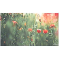 / Fairytale country #花をながめて #松戸 #ポピー #シャーレーポピー #東京カメラ部 #花 #花の写真館 #ファインダー越しの私の世界 #はなまっぷ #IGersJP #team_jp_ #team_jp_flower #photooftheday #poppy #flowerstagram #500px #kf_gallery #loves_japan #flower #flowers #dreamyphoto #tokyocameraclub #floral_secrets #light_nikon #tv_flowers #flowermagic #flowerslovers #flowerpower #flowerstagram #d750 #松戸フラワーライン gelinshop.com/...