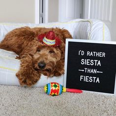 Siesta is the new fiesta. : @elliedoodledog