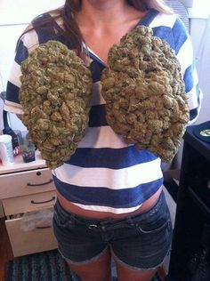 Growing two lungs of cannabis?