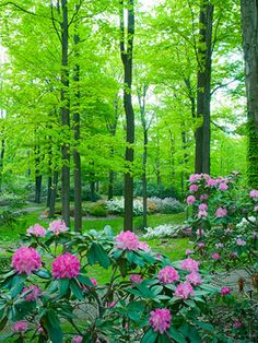 More than 20 miles of trails wind through the gardens of the 3,600-acre Holden Arboretum in Kirtland, Ohio.    http://www.midwestliving.com/garden/public-gardens/midwest-arboretums/?page=4#