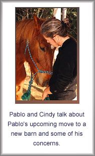 Consultation and Fees - Cindy Smith, Animal Communicator
