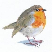 Robin by Mary Woodin