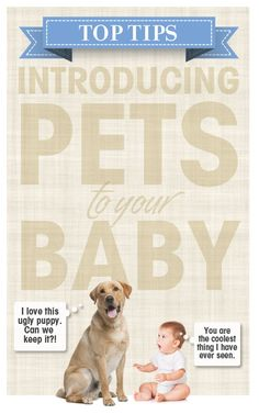 "Top Tips for Introducing Pets to Your Baby — Pregnant Chicken.     Favorite excerpt: ""[...] At least one person will ask you if you are going to get rid of [your pet] once the baby comes. [...] Be sure to tell these people that you have to keep the animal, otherwise who will you leave the baby with when you go to the bar?"""