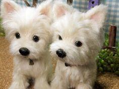 Cute Needle felting wool cute animals dogs pets(Via @chako373345)