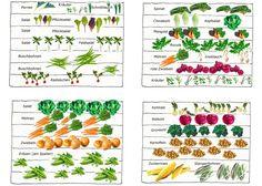 Wie man einen Gemüsegarten plant und anlegt. Ein Beispiel mit vier Beeten, die in Mischkultur entstehen. Mit genauer Abbildung.