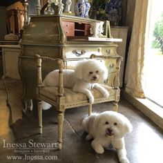 We're celebrating #NationalDogDay at Inessa Stewart's Antiques with our fluffiest helpers! Louis & Zoie love greeting customers and can't wait to see you at our stores! www.inessa.com 1643 Dragon at Oak Lawn Dallas, TX 75207 214.742.5800 5330...