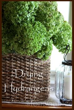 Drying hydrangeas!  Good to know since I've always dried mine into a droopy icky & soft pile.