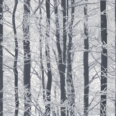 Frosted Wood Silver wallpaper by Arthouse