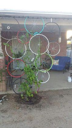 A Tucson gardener's bicycle  rim trellis.  Great re-purpose!