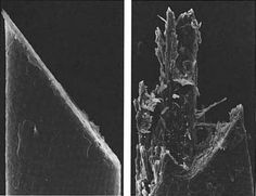 The hair on the left has been cut with a double edge single blade razor, the hair on the left has been cut with an electric razor. (Source: Under the Microscope: A Hidden World Revealed, Door Jeremy Burgess, Michael Marten, Rosemary Taylor)