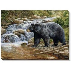 """""""Shadow Of the Forest (Black Bear)"""" Wrapped Canvas Art - American Expedition Bear Paintings, Wildlife Paintings, Wildlife Art, Original Paintings, Original Art, Bear Art, Pictures To Paint, Bear Pictures, Canvas Wall Art"""