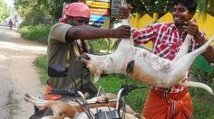 Petition · Take Dog Meat of Nagaland Menu · Change.org