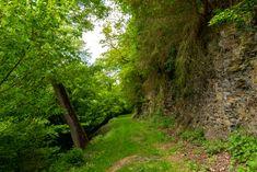 Waldweg am Schieferfels, Landschaft, aufgenommen im Mai