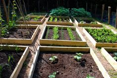 Neat raised beds.