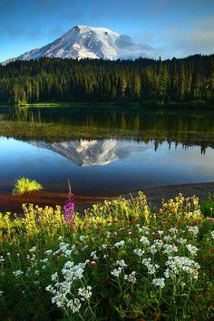 Mt Rainier Reflected In Reflection Lakes Mt Rainier National Park Washington by Randall J Hodges Photography*