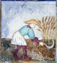 July - Cutting the wheat with a sickle Frescoes with the labors of the months Santa Maria del Castello