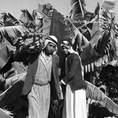 Bananas of Hifa 1930 - Palestine