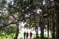 The Royal Botanic Gardens in Sydney are a massive area right on the water--perfect for picnics, tag football, or just sitting under a tree and reading a great book.