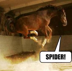 This is definitely me and the horses .. Freakin out over spiders!