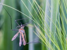 How to keep your yard mosquito-free this summer