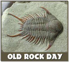 January 7 is Old Rock Day Pictures Of Fossils, Old Rock, Prehistoric Animals, Ammonite, Prehistory, Science And Nature, Sea Creatures, Natural History, Minerals