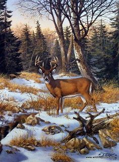 Artist Derk Hansen Unframed Buck Deer Print On The Edge Of The Woods | WildlifePrints.com