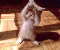 "#Cats  #Cat  #Kittens  #Kitten  #Kitty  #Pets  #Pet  #Meow  #Moe  #CuteCats  #CuteCat #CuteKittens #CuteKitten #MeowMoe      ""caught a mouse about a week ago"" ...   http://www.meowmoe.com/83229/"