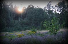 Life on the Farm, Ananda Farms of Camano Island, Washington.  # peace,#gogreen, #sustainability