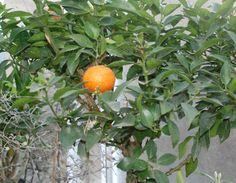 Vores Orangeri