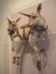 taxidermy...