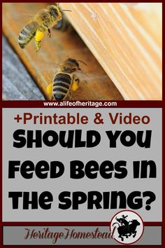 Bees | Bee Care | Feeding Bees | Bee How to | Feeding bees in the spring. What do you do with the bees you wintered? That's a really good question and I hope to help you out with the answers.
