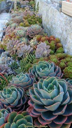 Tips for the design of small gardens - plantas - Jardinería Succulent Landscaping, Succulent Gardening, Cacti And Succulents, Planting Succulents, Backyard Landscaping, Landscaping Ideas, Cacti Garden, Succulent Garden Ideas, Outdoor Cactus Garden