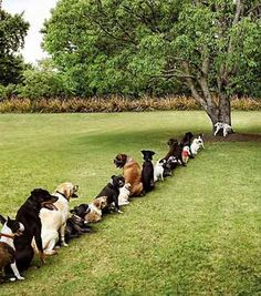 Dog Urine Place - poor dogs must stay in line to pee or the spots ruin the yard...